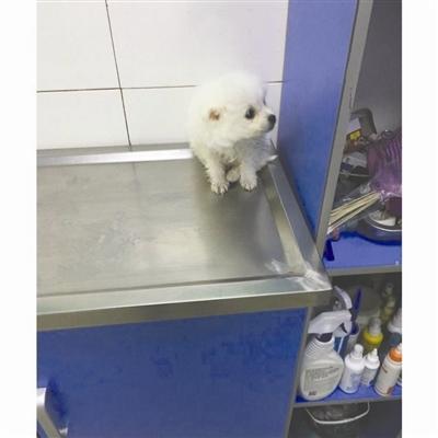 """宠物狗买来一周左右死亡 顾客质疑""""星期狗""""?"""