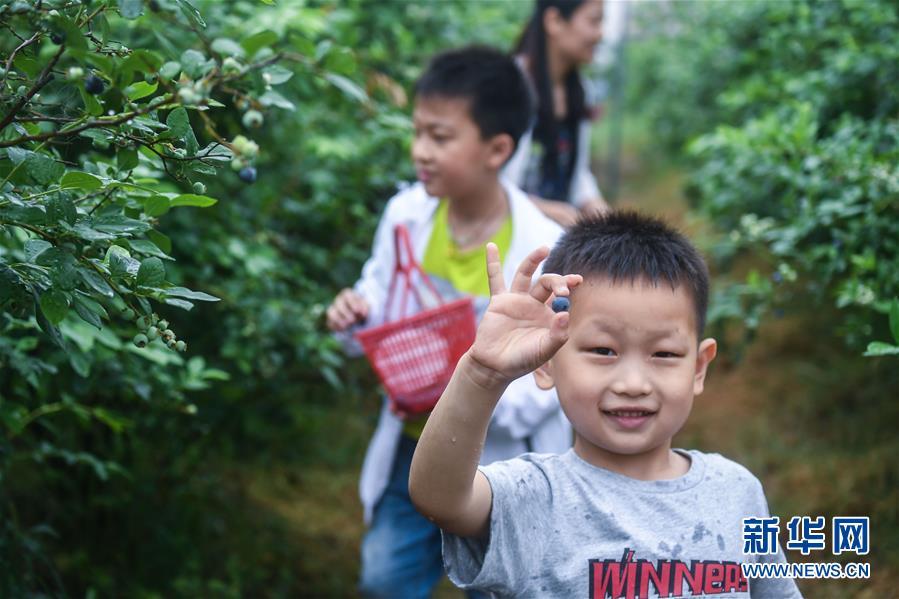 """""""生态蓝莓""""成为乡村旅游""""金名片"""""""